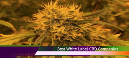 Best Private Label CBD Oil Companies | Best CBD Oils for Sale Online Wholesale
